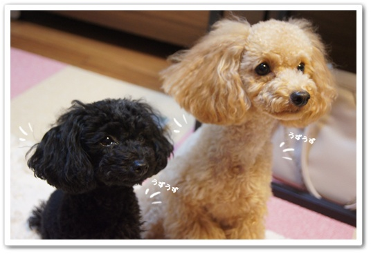 20110906yuzukosyo1.jpg