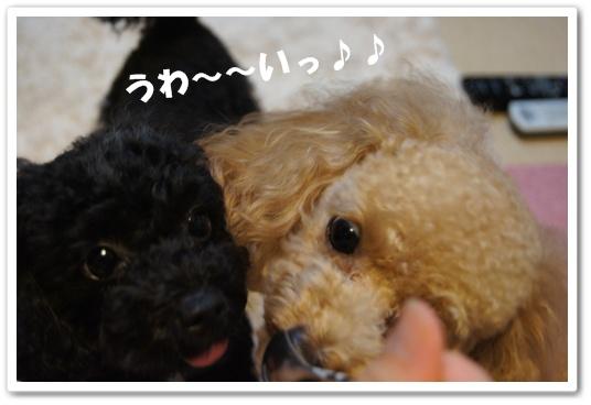 20110906yuzukosyo2.jpg