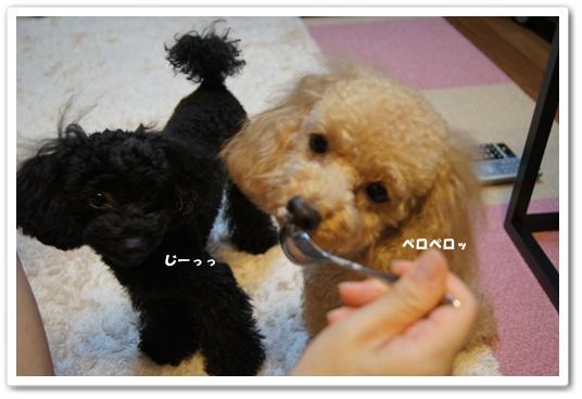 20110906yuzukosyo3.jpg