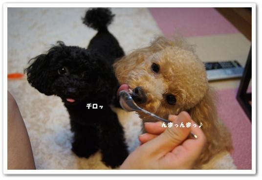20110906yuzukosyo4.jpg