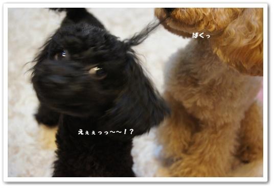 20110906yuzukosyo8.jpg