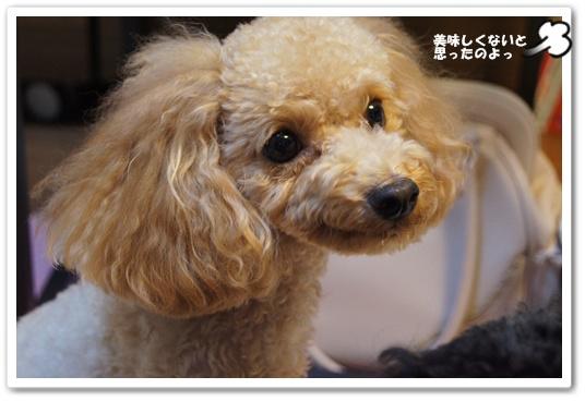 20110906yuzukosyo9.jpg