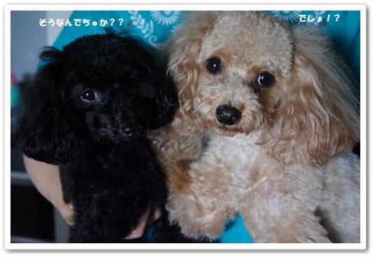 20110907yuzukosyo4.jpg