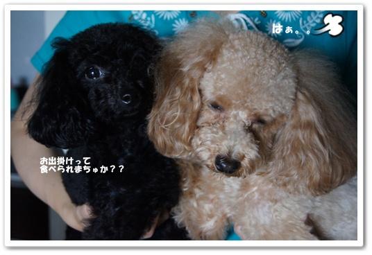 20110907yuzukosyo5.jpg