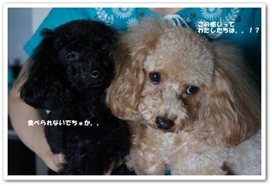 20110907yuzukosyo6.jpg