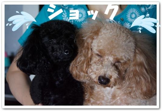 20110907yuzukosyo7.jpg