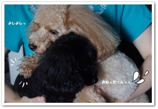 20110907yuzukosyo8.jpg