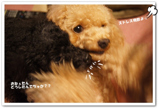 20110909yuzukosyo1.jpg