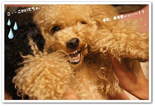 20110909yuzukosyo2.jpg
