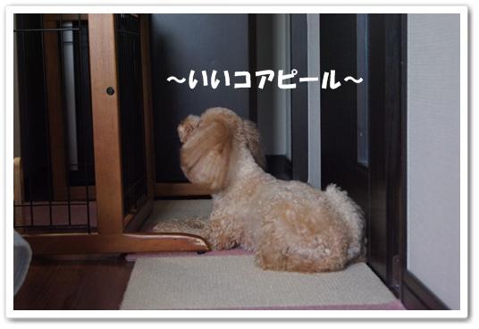 20110912yuzu1.jpg
