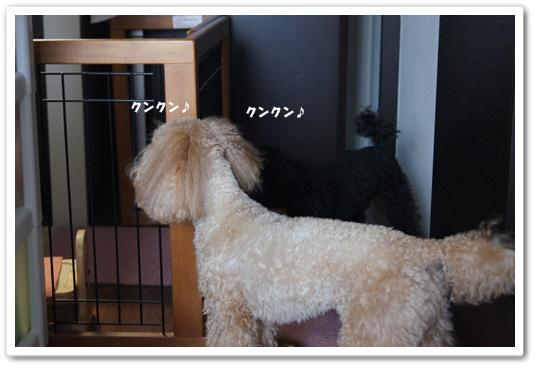 20110912yuzukosyo1.jpg