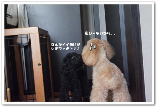 20110912yuzukosyo2.jpg