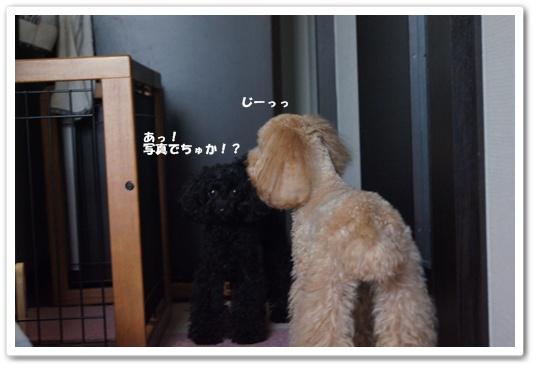 20110912yuzukosyo3.jpg