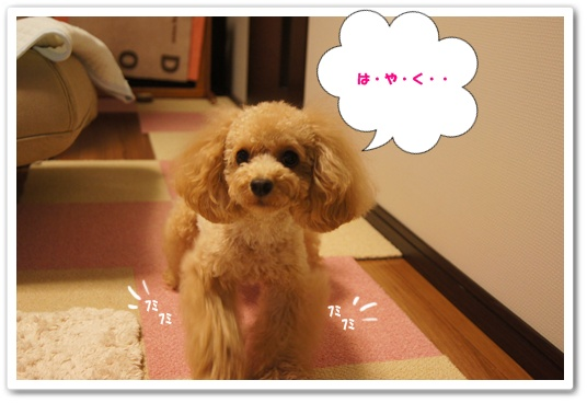 20110916yuzu2.jpg