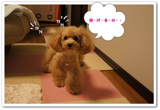 20110916yuzu3.jpg