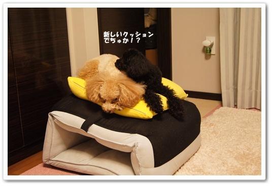 20110920yuzukosyo2k.jpg