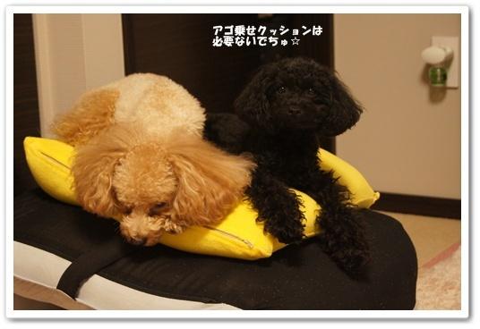 20110920yuzukosyo4k.jpg