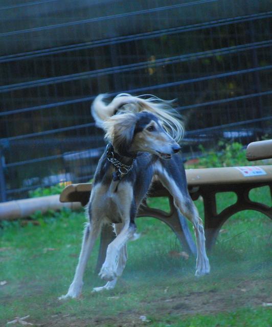 dog run-2