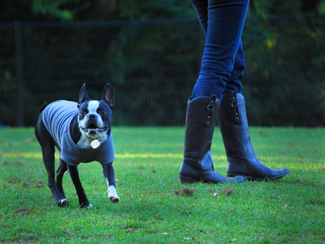 dog run-4