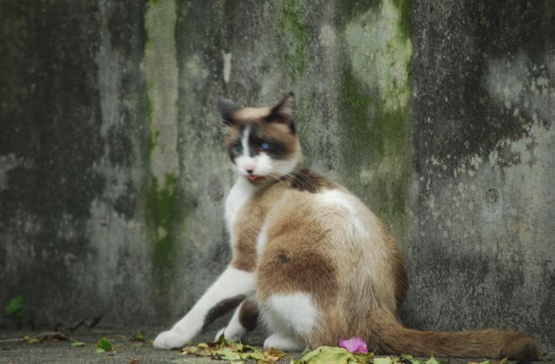 ぶくぶくちゃネコ-1