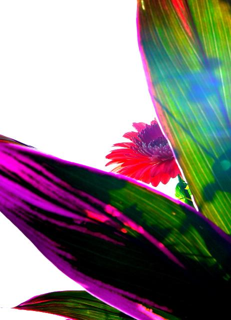 P1050923 2011-05-04 8-54-4