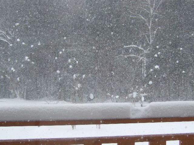 今日も雪が降ってます1