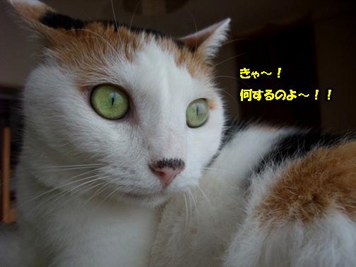 なにすんのよ~!!