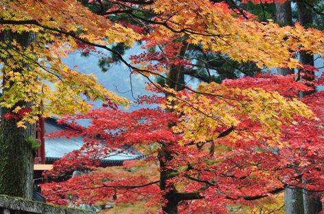 東照宮の紅葉