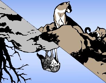 動物映画「クーガー荒野に帰る/狼王ロボ」観ました