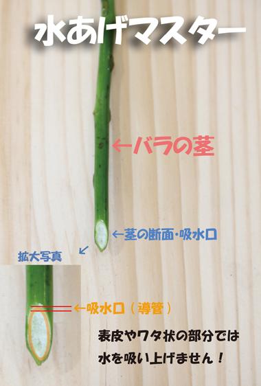 茎断面画像