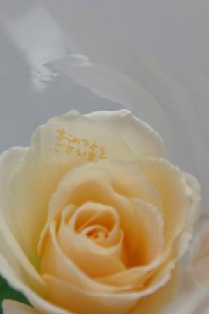 7_20100125104438.jpg