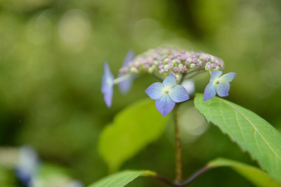 梅雨にあって輝く花