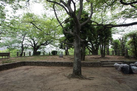 20110503_fukuoka_castle-91.jpg