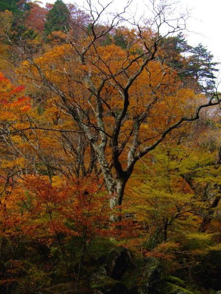 葉を落とした木