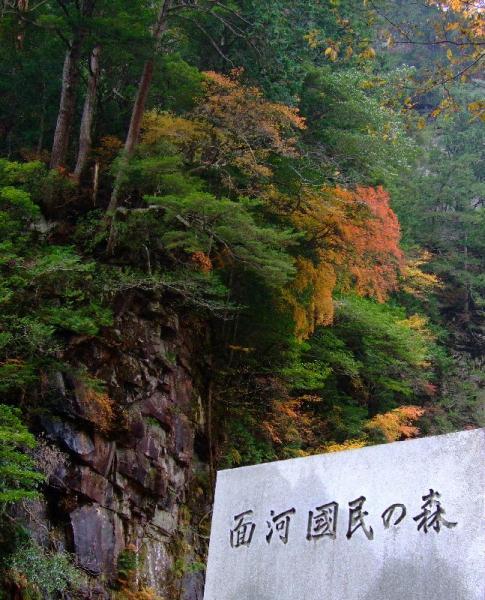 亀岩の紅葉