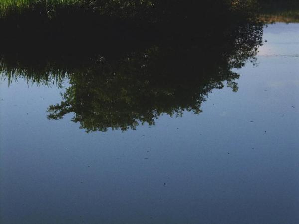 初夏の水面03