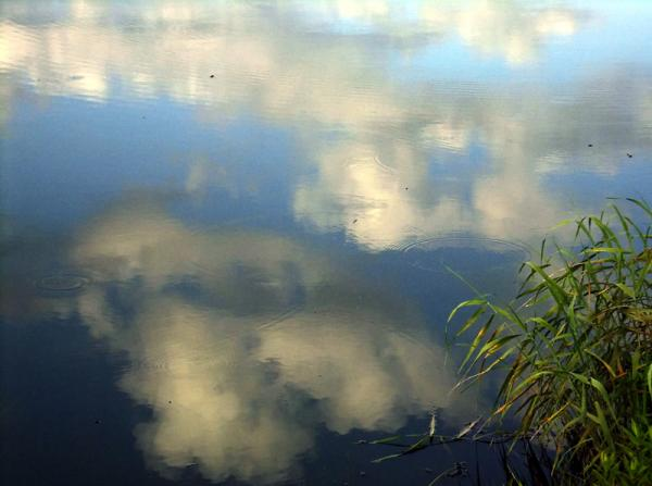 初夏の水面06
