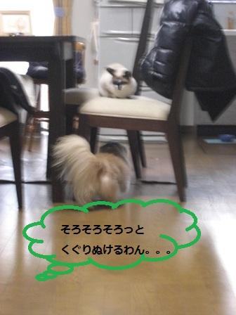 20120124002.jpg