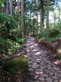 自然観察の森3