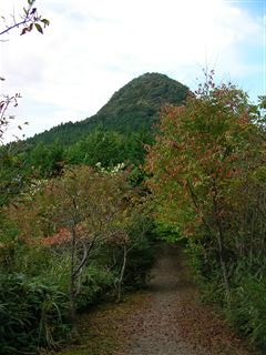 自然観察の森7