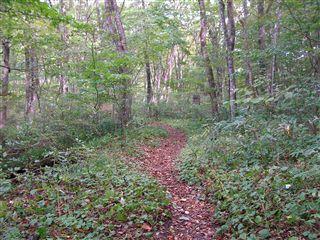 二口渓谷自然歩道6