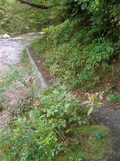 二口渓谷自然歩道1