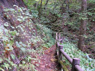 二口渓谷自然歩道9