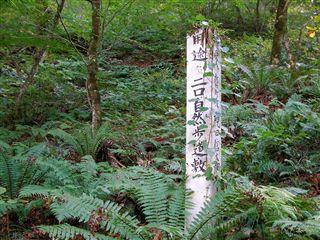 二口渓谷自然歩道13
