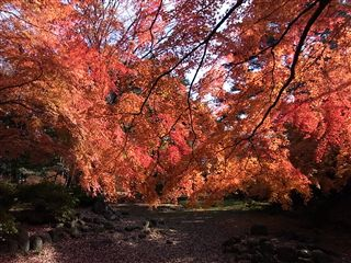 200911櫻ヶ岡公園1