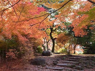 200911櫻ヶ岡公園7