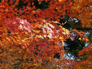 200911櫻ヶ岡公園2