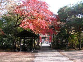 200911桜岡大神宮2