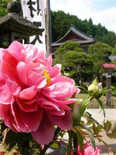 100521金蛇水神社5