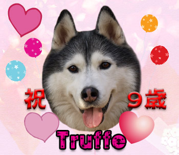 お誕生日トリュフ